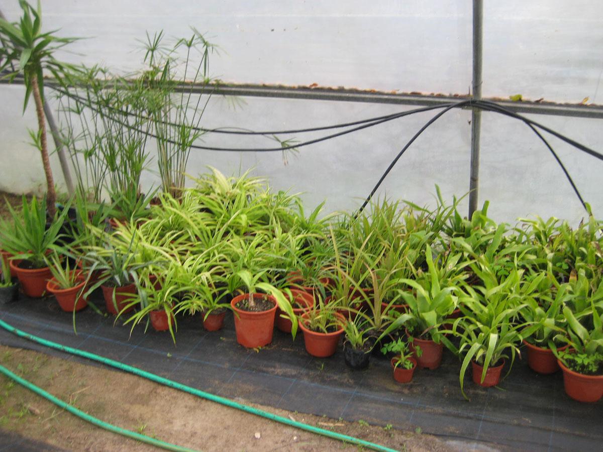 Plantas no exterior na Quinta da Bica